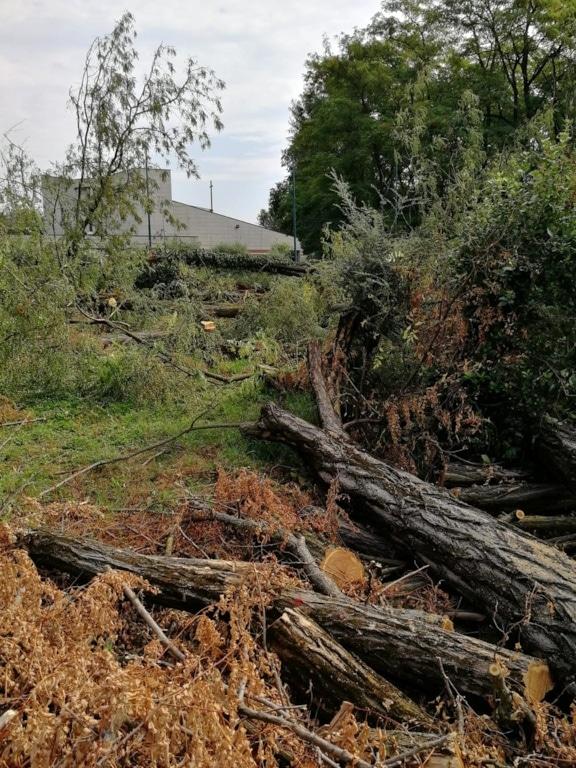 taglio-alberi-via-umbria-verona-2-2