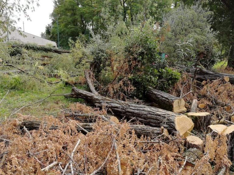 taglio-alberi-via-umbria-verona-4-2