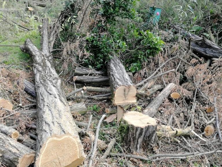 taglio-alberi-via-umbria-verona-4