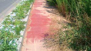 mazzantica-villafontana una pista ciclabile nella foresta amazzonica. grazie sindaco montagnoli e assessore giaretta ( mazzantichese doc)-4