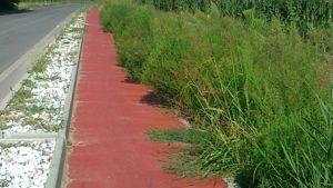 mazzantica-villafontana una pista ciclabile nella foresta amazzonica. grazie sindaco montagnoli e assessore giaretta ( mazzantichese doc)-2
