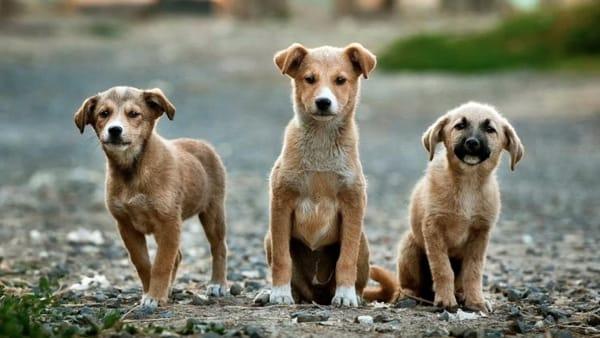 A Verona un corso di formazione e patentino per proprietari di cani