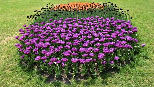 Scatta la Tulipanomania: torna il contest fotografico al Parco Giardino Sigurtà