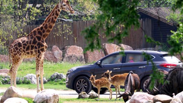 Parco Natura Viva, alti costi di gestione: «Abbiamo bisogno di aiuto»