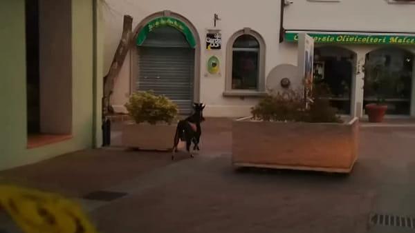 Un «becco» per le strade di Malcesine per allontanare il coronavirus