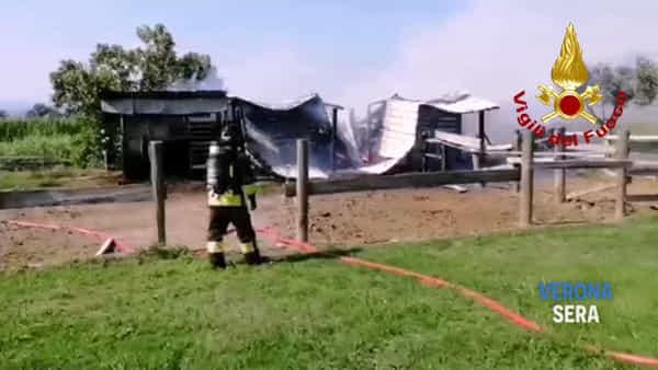 Un incendio scoppia in un piccolo maneggio: portati in salvo cinque cavalli