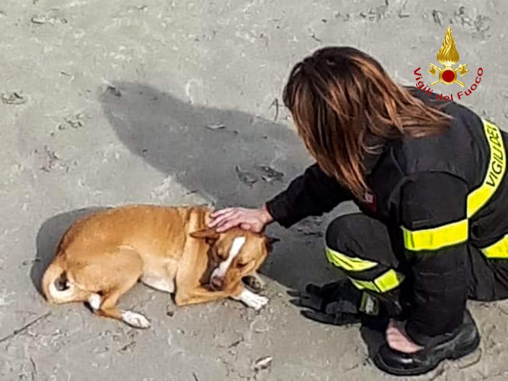 cane salvato vigili del fuoco1